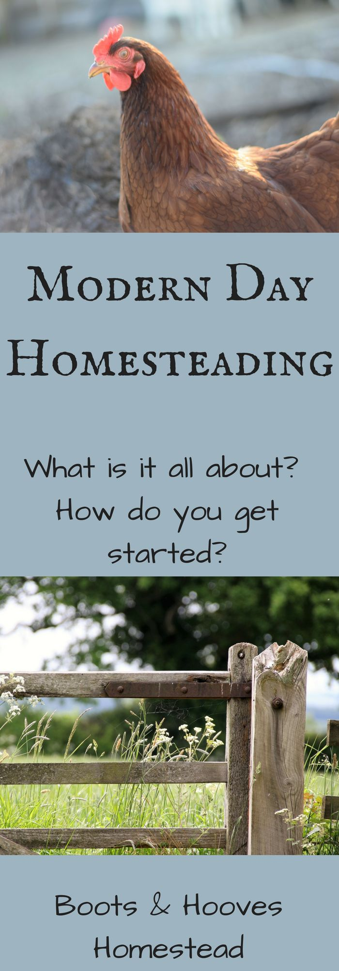 What is a modern homesteader? How do you start homesteading?