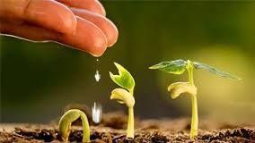 Job for agronomist in Africa