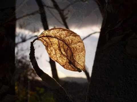 おはようございます。 だいぶ秋らしい気候になってきましたので、今朝の一曲は秋の定番「枯葉」、エリック・クラプトンのヴォーカルとギターで。 しっとりとブルージーに歌うクラプトン、後半はギターを聴かせてくれます。 実にいいですねぇ。