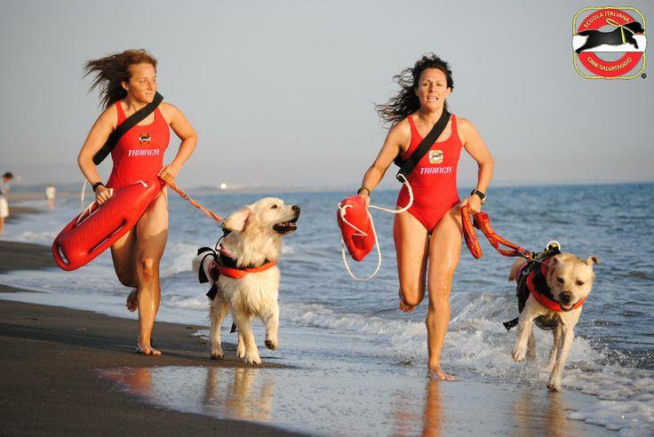 Spesso non ci si rende conto dell'enorme supporto dei cani da salvataggio… come quelli della SICS Scuola Italiana Cani Salvataggio-Tirreno!