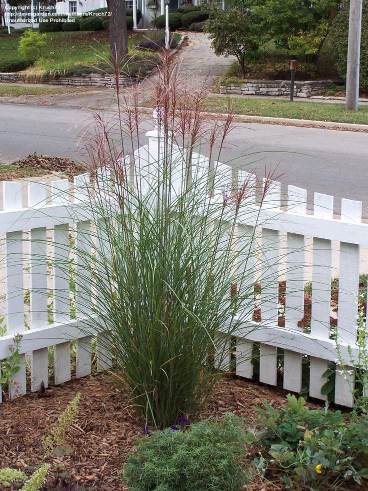 Landscaping with zebra grass landscaping ideas pinterest for Landscaping with zebra grass