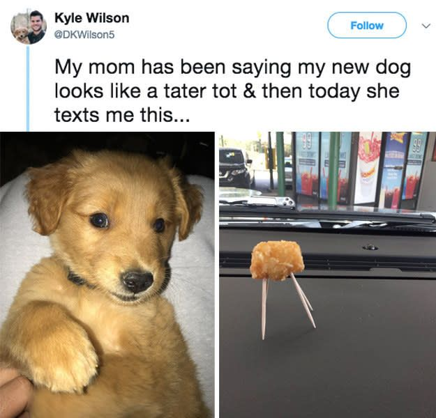 19 Hilarious Parents Who Made Everyone Pee Laugh In 2017 Cute Funny Animals Animal Memes Funny Animal Memes