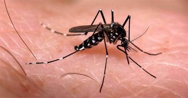 """Research Beam added a report on """"Chikungunya - Pipeline Review, H2 2015"""""""