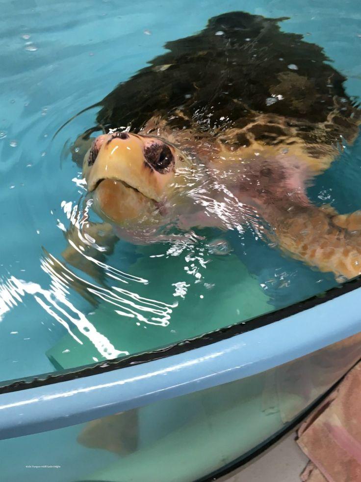 8 best beach house reunion images on pinterest turtles aquarium things to do in charleston sc south carolina aquarium turtle hospital fandeluxe Choice Image