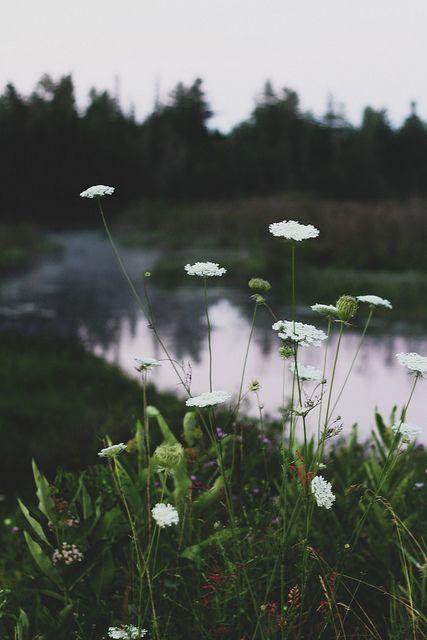 nicky flowers tumblr