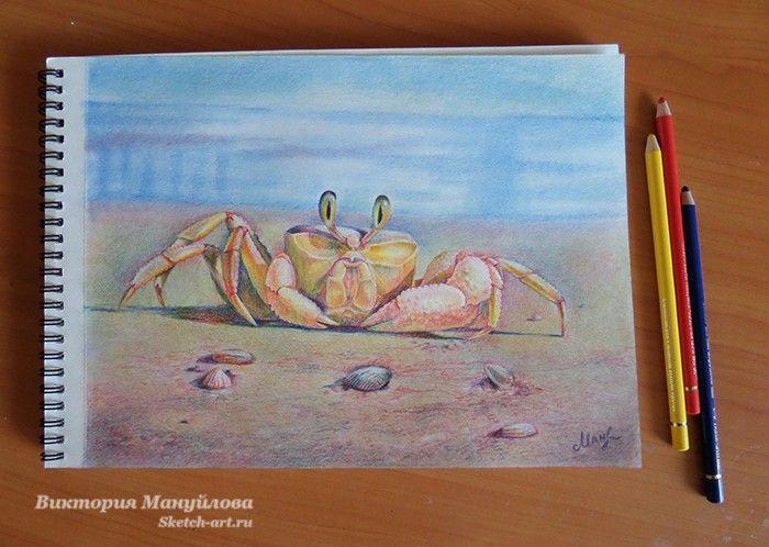 рисунок краба цветными карандашами