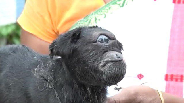 'It might be something from God that the baby goat was born in our house.'