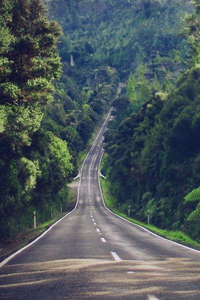 Waitakere Ranges, near Auckland, offers plenty of bush walks. . .beautiful area. . . by Hannah Davis on Flickr.