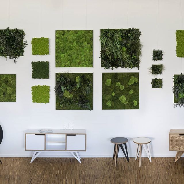 STYLEGREEN showroom impression. When you come to Munich, we'll be honored to welcome you! #stylegreen #100percentnature #0percentcare #architectsdigest #ambiente2016 #architecturelovers #architecture #mooswand #mossfamily #mosswall #greenwall #greenoffice #interorealestate #interiordesign #interiorgreen #plantpicture #preservedmoss #preservedflower #pflanzenwand #pflanzenbild #einrichtung #greenwall #green #mossporn #plantpicture #pflanzenwand #mossbild #interiordesign #interiorgreen…