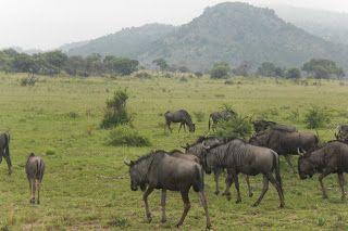 The first safari. Pilanesburg, SA.