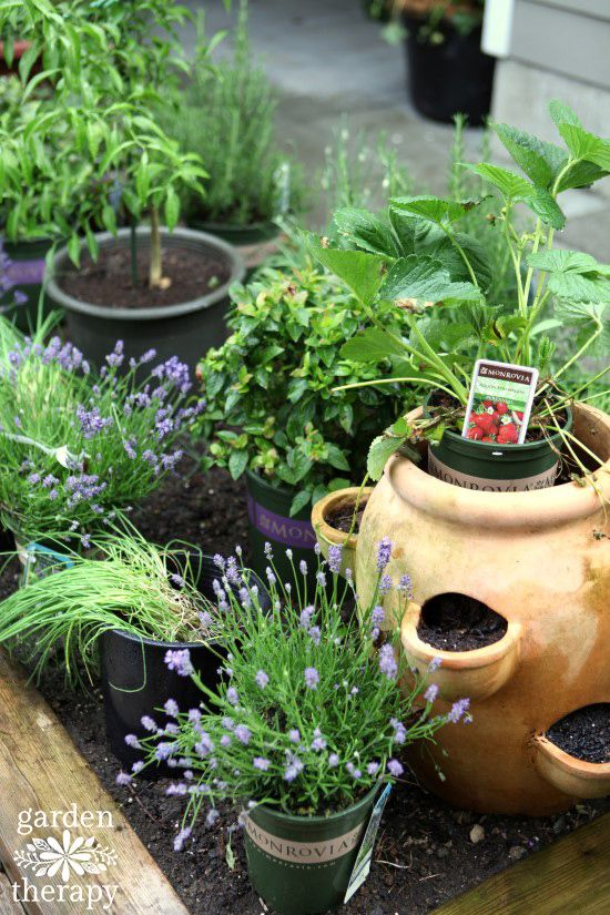 Herb Garden Renovation Planning