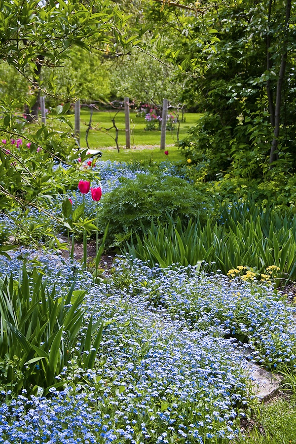 1000 images about forget me nots on pinterest gardens for Flowers landscape gardening