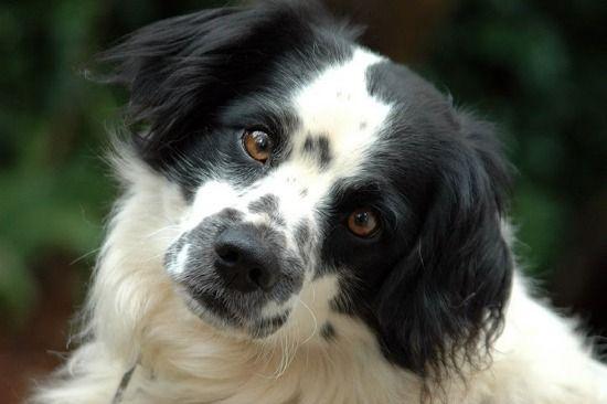 Você sabe quando o seu cão esta chateado com você? Conheça os tipos de comportamento. Quando o seu melhor amigo esta alegre, é fácil perceber: ele fica feliz, adora brincar e correr pela casa. Mas,…