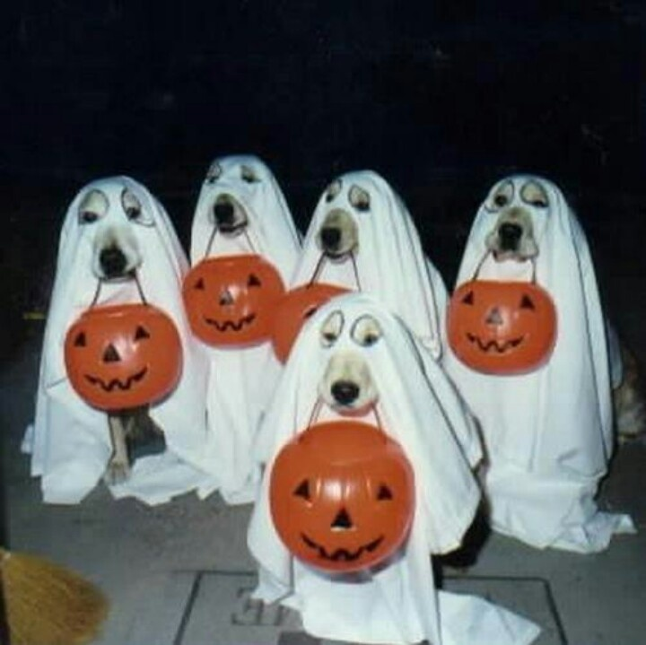 ghost dogs! pet costume ideas ipawz.com