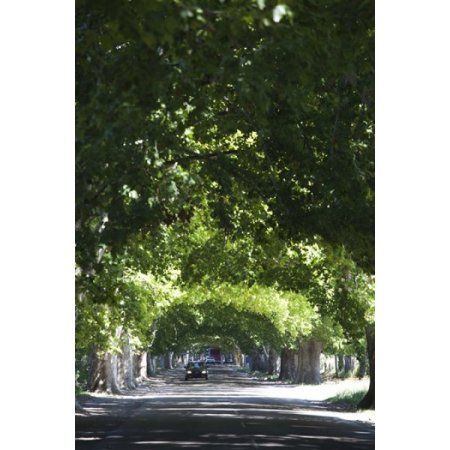 Car on a country road Lujan De Cuyo Mendoza Province Argentina Canvas Art - Panoramic Images (24 x 36)