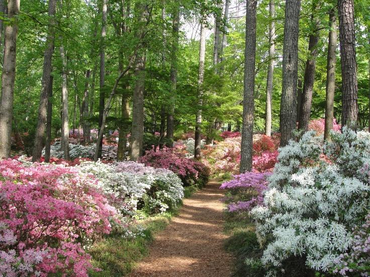90 Best Callaway Gardens Images On Pinterest Callaway Gardens Georgia And Columbus Georgia