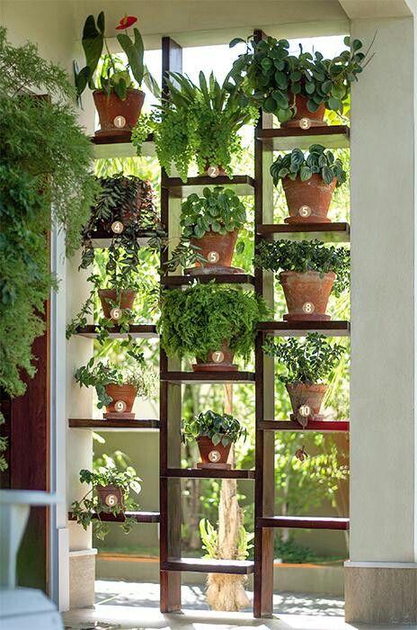 ❚ Enfeitam o vistoso jardim vertical: (1) antúrio; (2) avenca e bromélia plantadas juntas; (3) peperômia; (4) lambari-roxo; (5) peperômia-zebra; (6) filodendro-pendente; (7) samambaia-crespa; (8) brilhantina; (9) em um só vaso, ripsále e filodendropendente; e (10) peixinho e hera-roxa compartilhando o mesmo local.