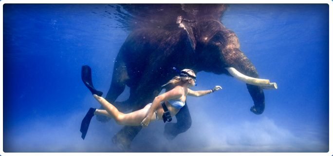 Swimming Elephant | Diveandaman