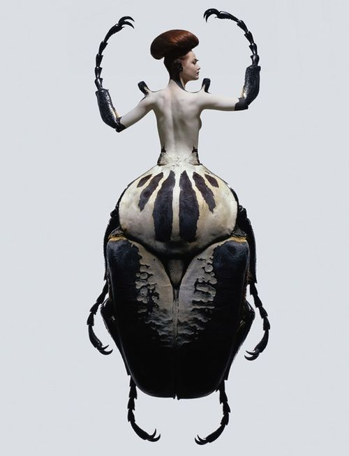 Laurent Seroussi f-l-e-u-r-d-e-l-y-s: INSECTES Women are often... | The Form of Beauty