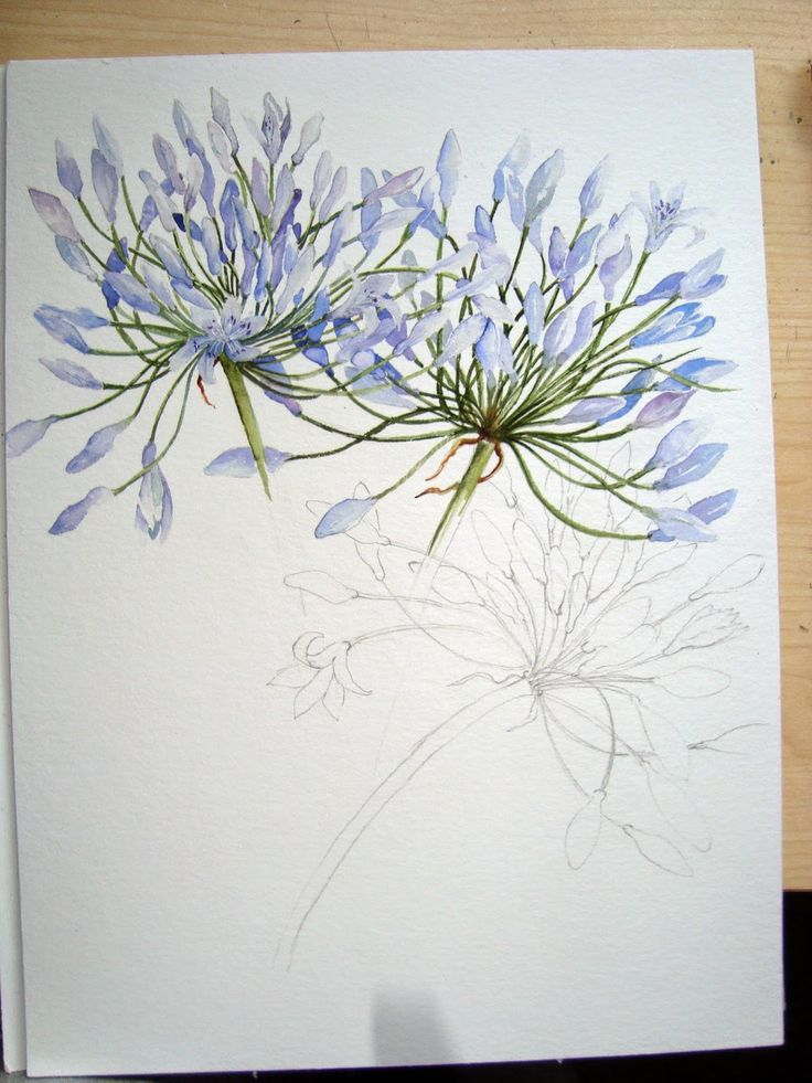 Watercolour Florals   Nice site where the artist walks you through each…