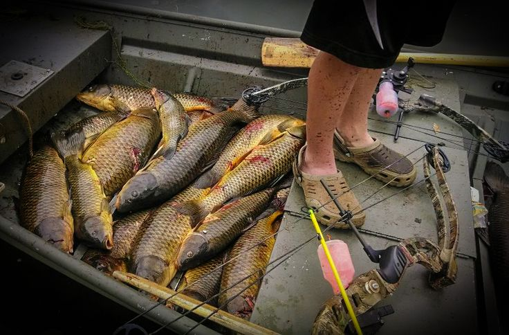 5 Tips For Bowfishing Beginners