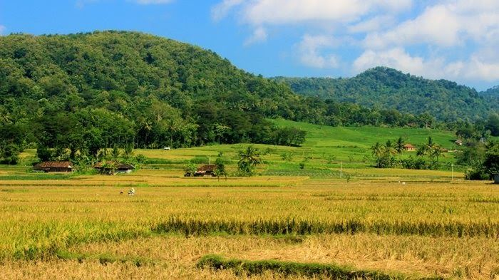 26 Pemandangan Indah Pedesaan Seindah Lukisan Panorama Alam Terasiring Di Desa Download Jalan Pemandangan Pedesaan Foto Grati Di 2020 Pemandangan Pedesaan Lanskap