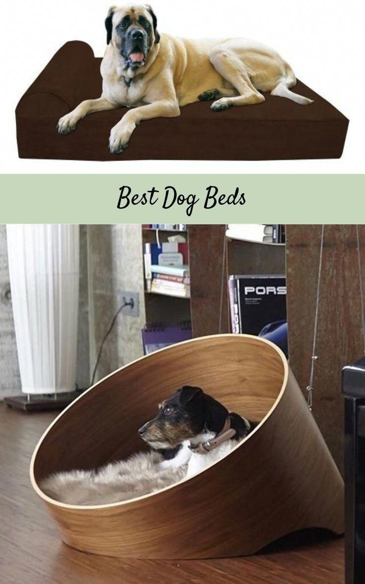 Ultimate Dog Bed Dog Moga Dog Beds For Small Dogs Dog Bed Cool Dog Beds