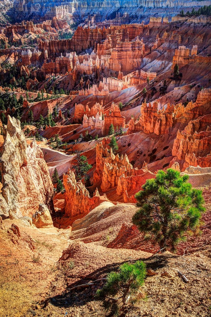 Amazing nature. The colours of Bryce Canyon.