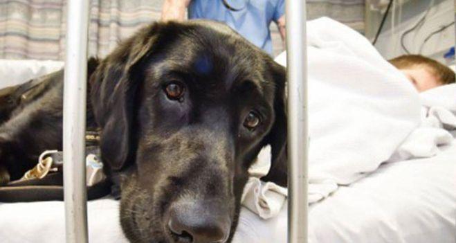 #Un hospital de España permite que los niños internados puedan ver a sus perros - ARG Noticias: ARG Noticias Un hospital de España permite…
