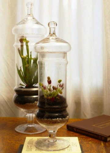 19 best images about terrariums on pinterest gardens miniature and plants. Black Bedroom Furniture Sets. Home Design Ideas