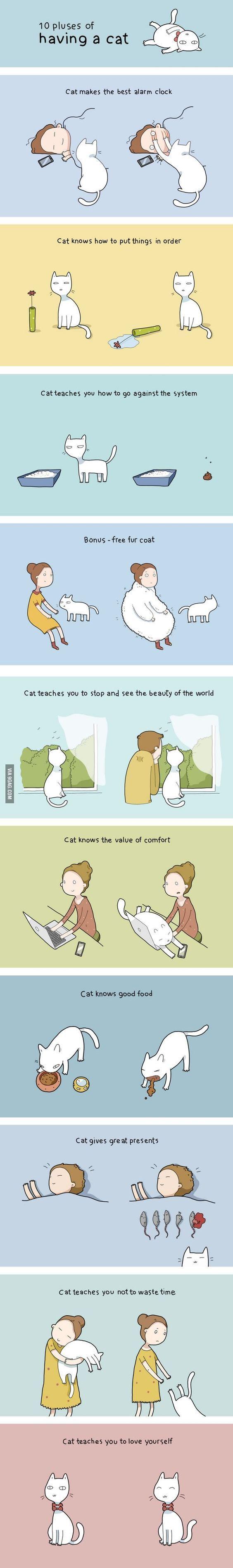 10 beneficios de tener un gato :3