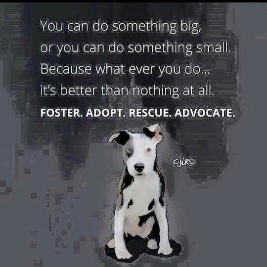 FOSTER. ADOPT.  RESCUE.  ADVOCATE.  You can do something...