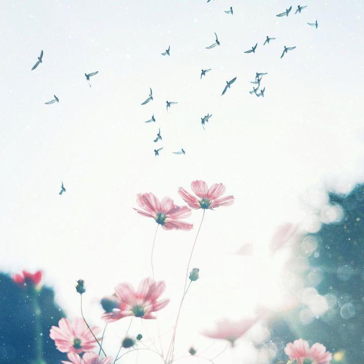 Best 25+ Flower Phone Wallpaper Ideas Only On Pinterest