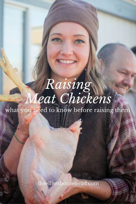 Raising Meat Chickens http://www.theelliotthomestead.com