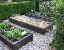 Jarrah railway sleepers are fairly cheap for their size, and would make great raised beds. I'm thinking of using them to create a terraced vegetable plot, with the espaliered fruit-trees at one end against the wall.