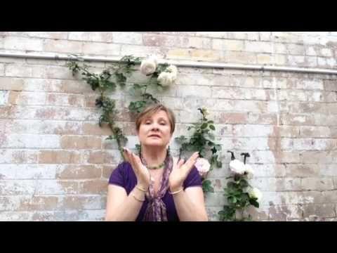 Tao Song Tao Dance Healer Certification training program.
