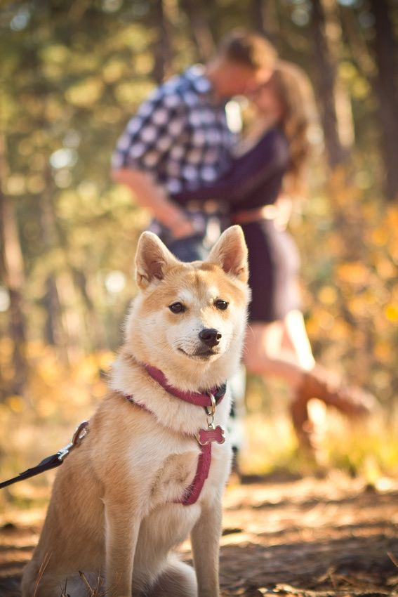 Couple photos with dog