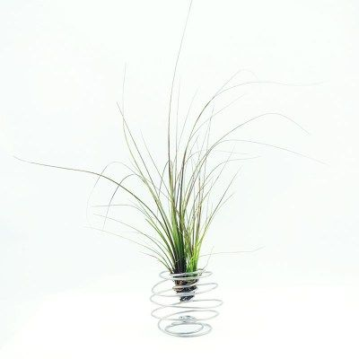 Tillandsia Air Plants Wire Works on herb garden planters