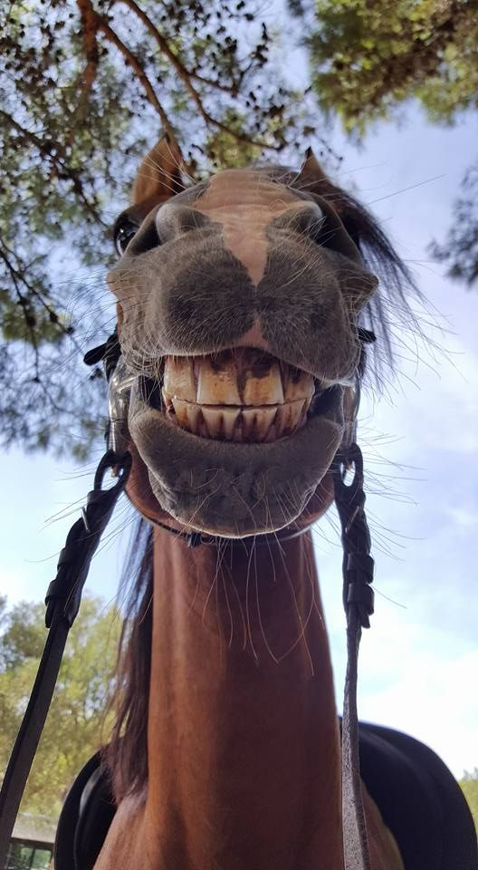 Say cheese... Funny horse smile!