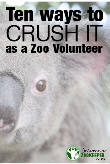 Excellent advice for wannabe zoo volunteers who want to be zookeepers! #zookeeper #zoo