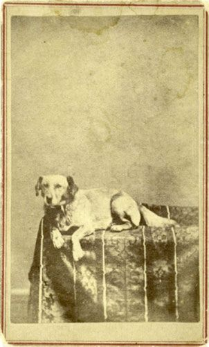 Extremely rare CDV of Abraham Lincoln's dog, Fido. c. 1865. This dog was given away by the Lincoln's before they moved into the White House.