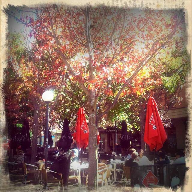Bowral in Autumn