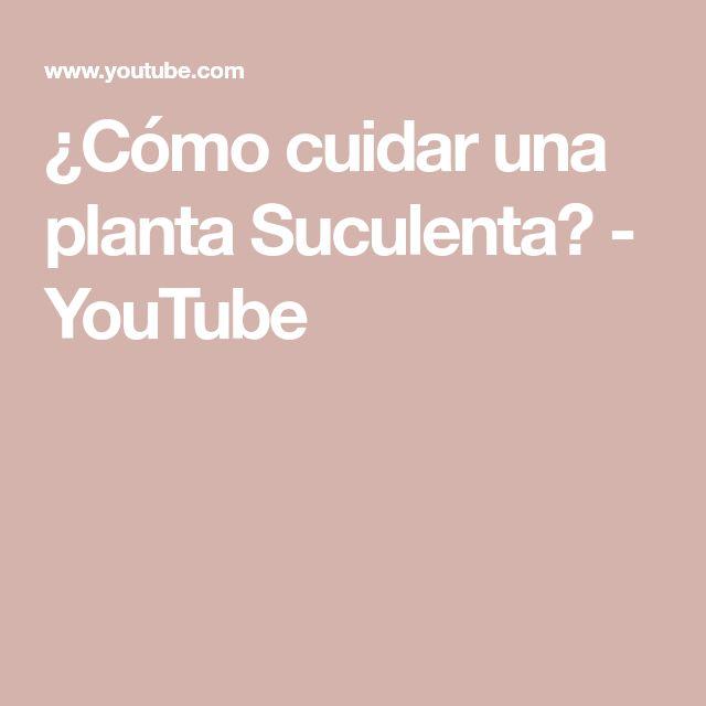 ¿Cómo cuidar una planta Suculenta? - YouTube