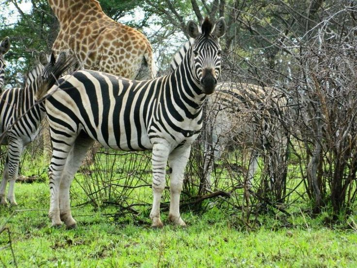 Game drive, Pongola Game Reserve, South Africa