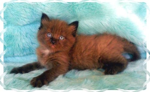 Cat That Looks Like A Fox most unusual col...