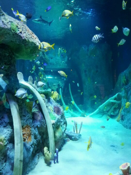 24 best visit kansas city images on pinterest kansas city park in and fish aquariums. Black Bedroom Furniture Sets. Home Design Ideas