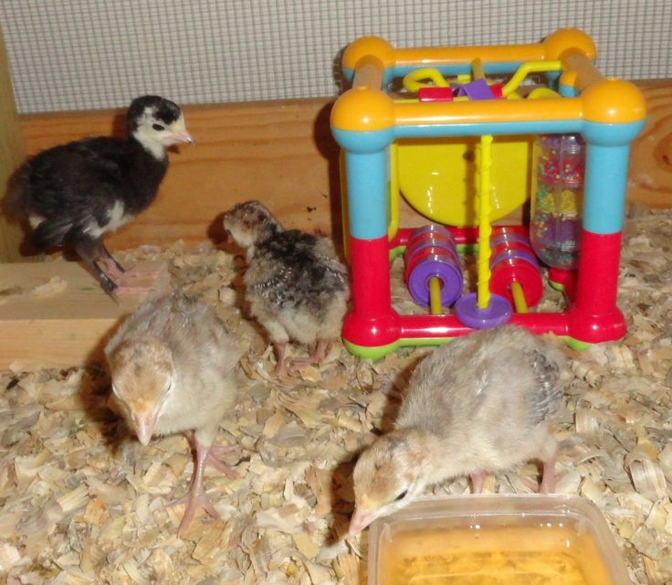Best 25 Chicken Toys Ideas On Pinterest Diy Chicken