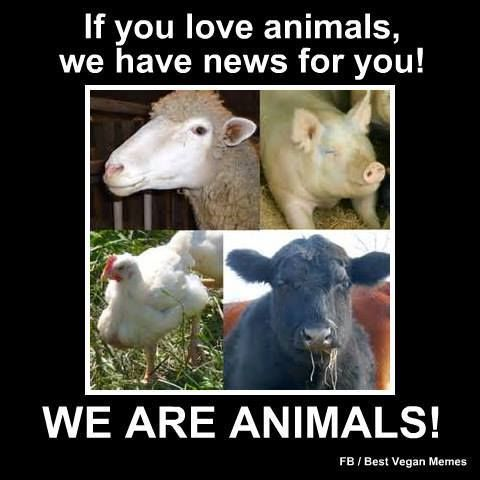 People often love their pets. Some even make pets of animals they intend to kill for food. Why not simply respect all innocent creatires by letting them live?  #vegan