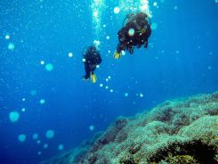 Diving in the Togean National Park: Part 1