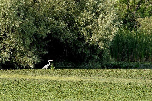 Történetek képekkel: Varázslatos Tisza-tó